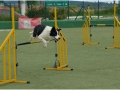 salto2