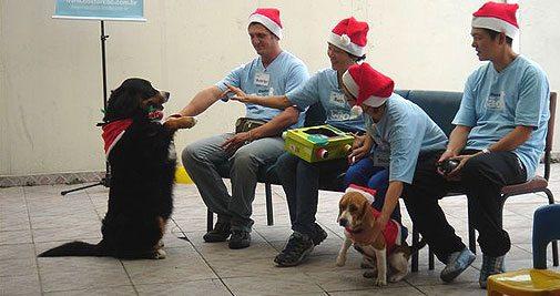 Atividade / Terapia Assistida por Animais