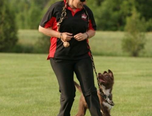 As possibilidades em adestramento de cães, por Susan Garrett