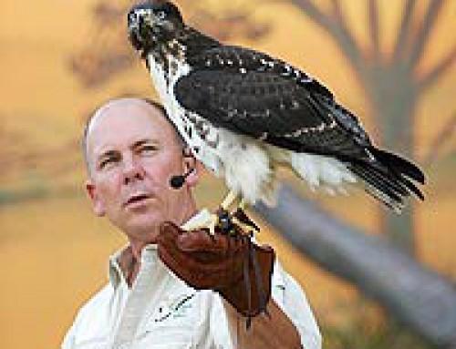 O SEGREDO do Treinamento de aves por Steve Martin