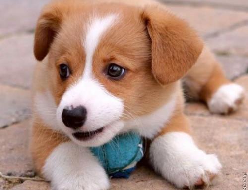Marley ou Lassie?