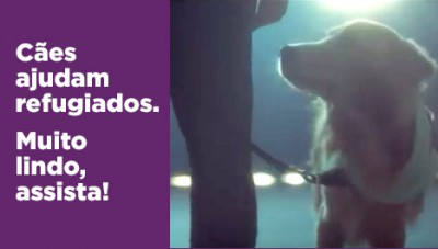 Cães ajudam refugiados. Assista!