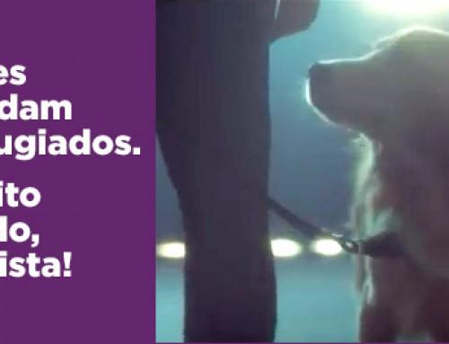 Cães auxiliam crianças refugiadas de guerra! Impossível não se emocionar.