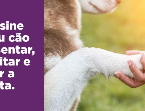 Como ensinar o seu cão a sentar, deitar e dar a pata