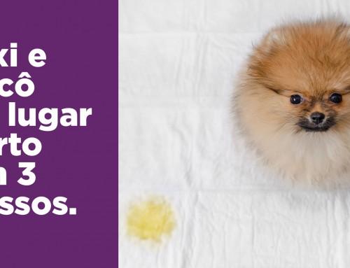 3 passos para ensinar o seu cão a fazer xixi e cocô no lugar certo sempre.