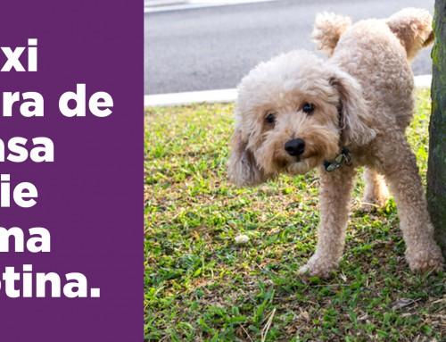 Xixi e cocô fora de casa: crie uma rotina com o seu cão.