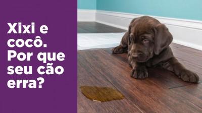 Xixi e cocô no lugar certo: por que o cão erra?