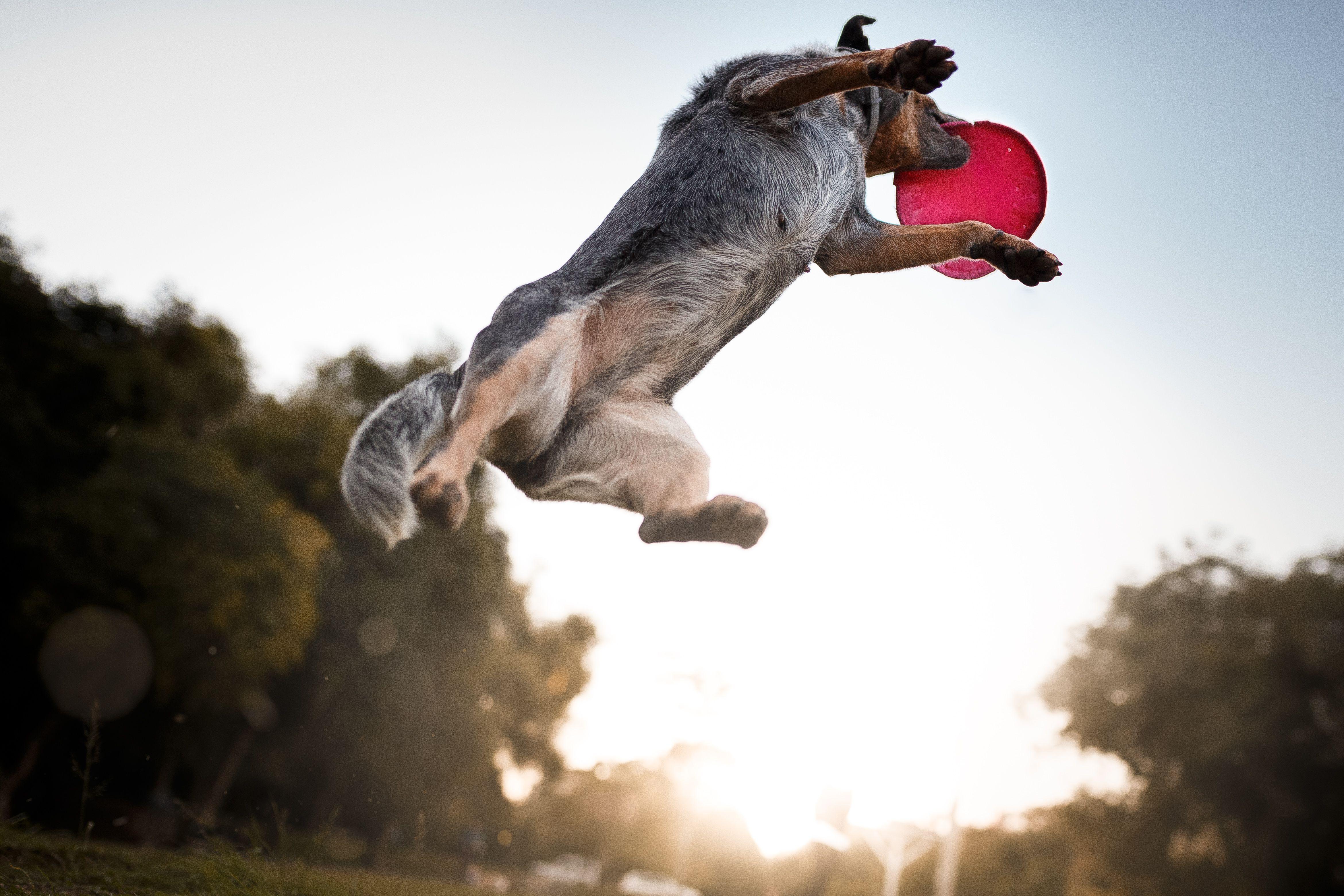 Você vai ter que escolher entre diferentes abordagens. Na Tudo de Cão, adotamos adestramento positivo.