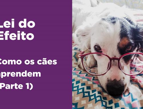 Lei do Efeito – Como os cães aprendem (Parte 1)